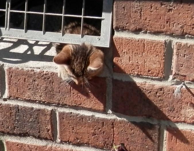 Kitten Under House 3