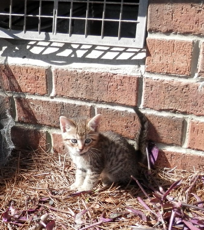 Kitten Under House 4