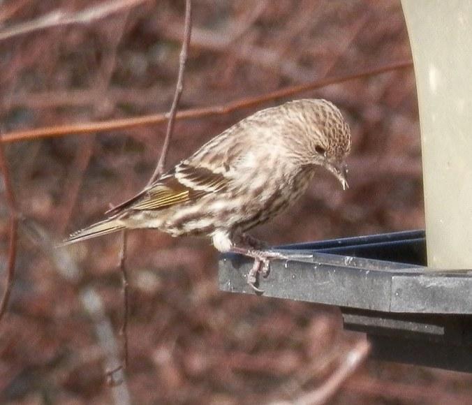 Closeup of Bird on Feeder