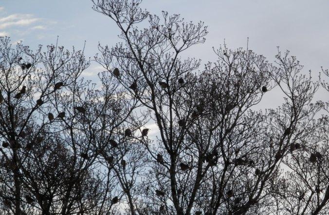 Birds in the Dogwood Tree