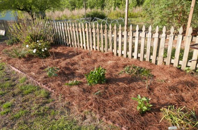Flower Bed with Pine Straw Mulch