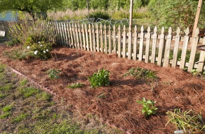 Flower Bed with Pine Straw Mulch