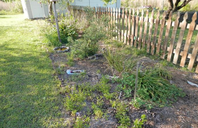 Flower Bed Before Mulch