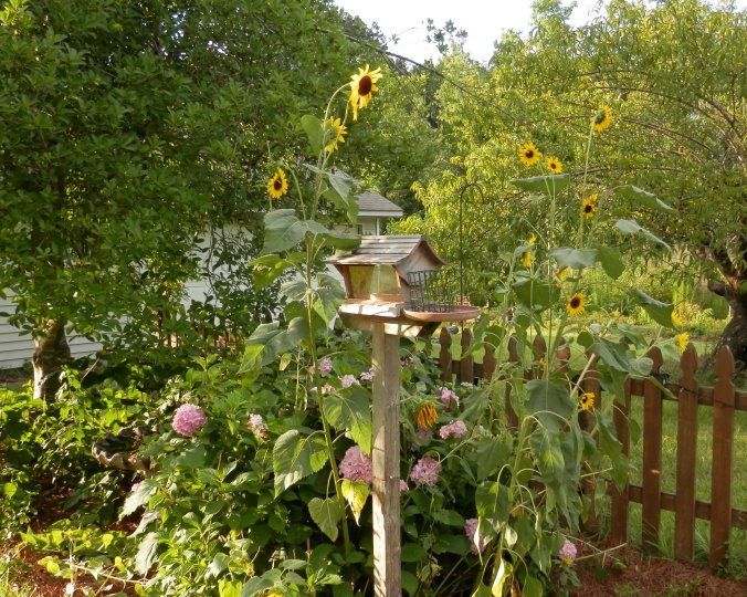 Bird Feeder and Sunflowers II