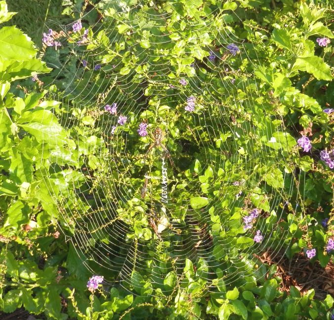 Spider Web From Above