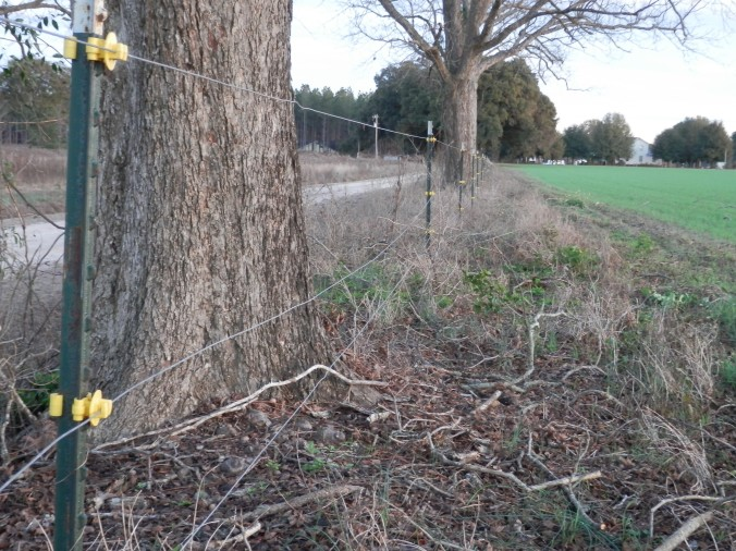 Electric Fence Around Pasture