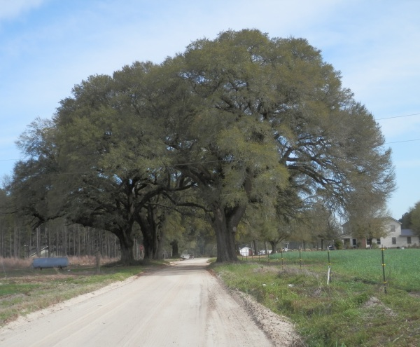 Brannen Oaks by Old Savannah Road