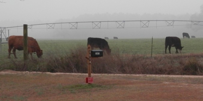 Mailbox with cows